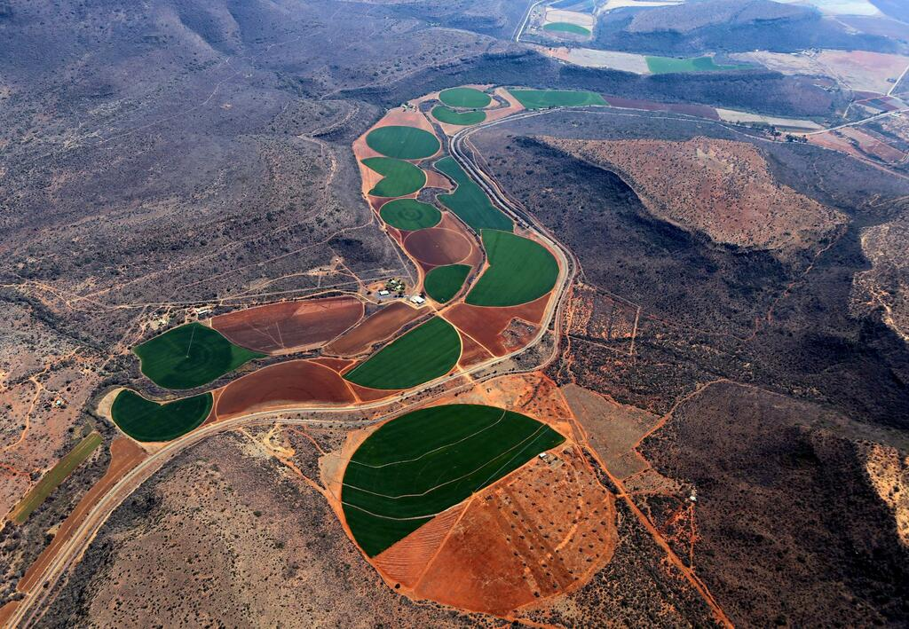 Crops in South Africa