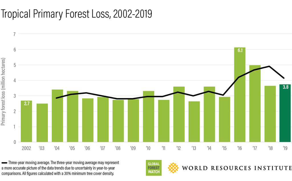 Forest loss